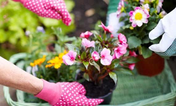 Consigli di giardinaggio per maggio calendario valtellinese for Cosa piantare a dicembre